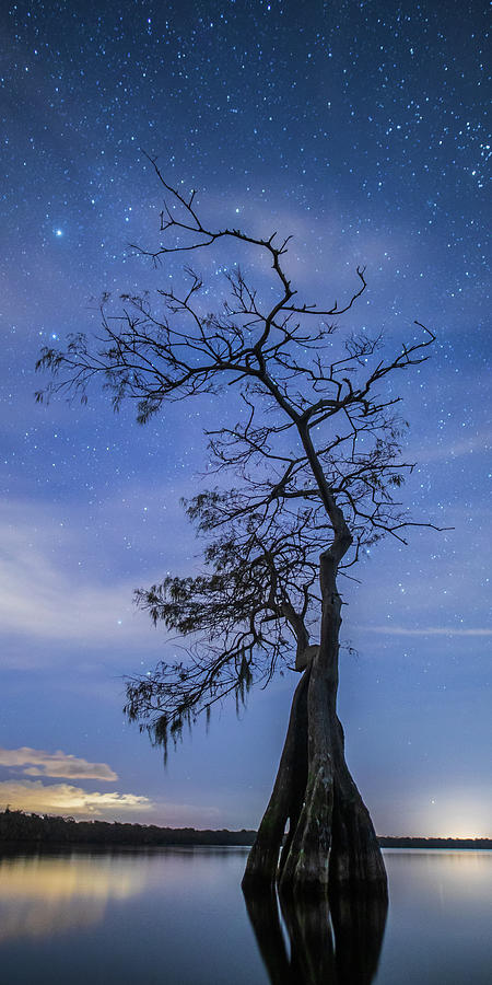 Reaching for the Stars by Stefan Mazzola