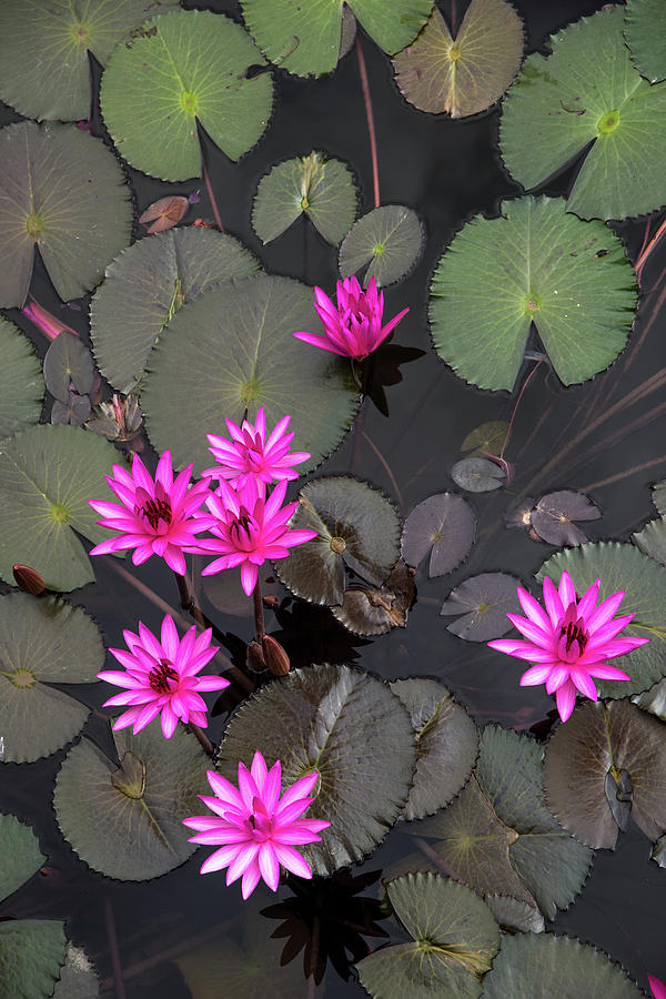 Beautiful Photograph - Red lily pond  by Zina Zinchik