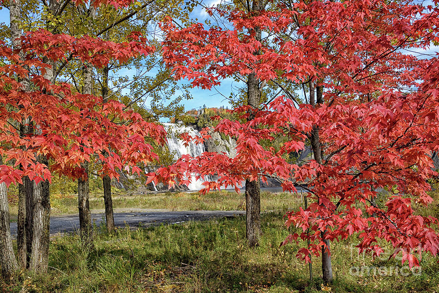 Red Maples At Chute Montmorency Photograph