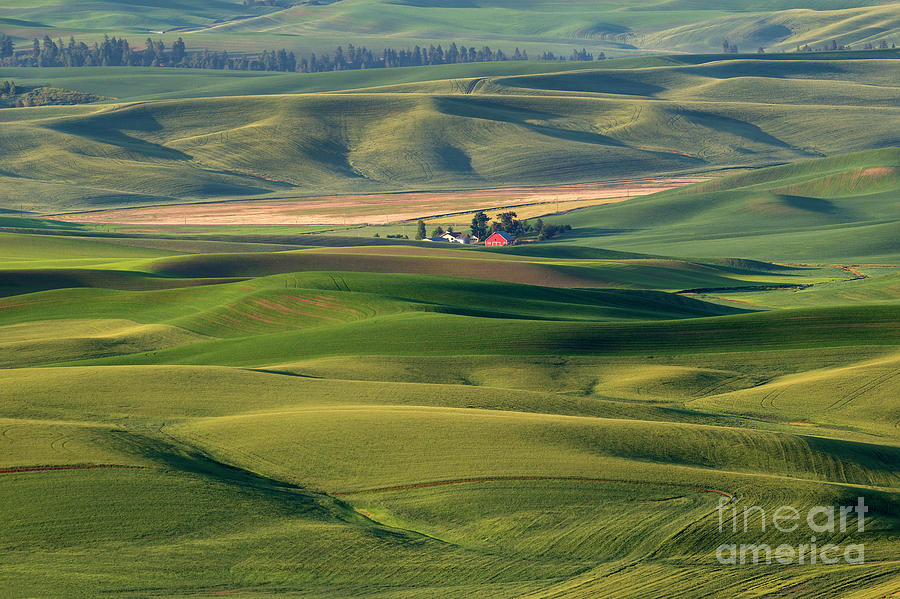 Red on Green by Mike Dawson