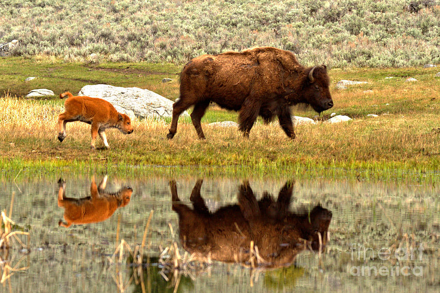 Reflections With The Red Dog by Adam Jewell