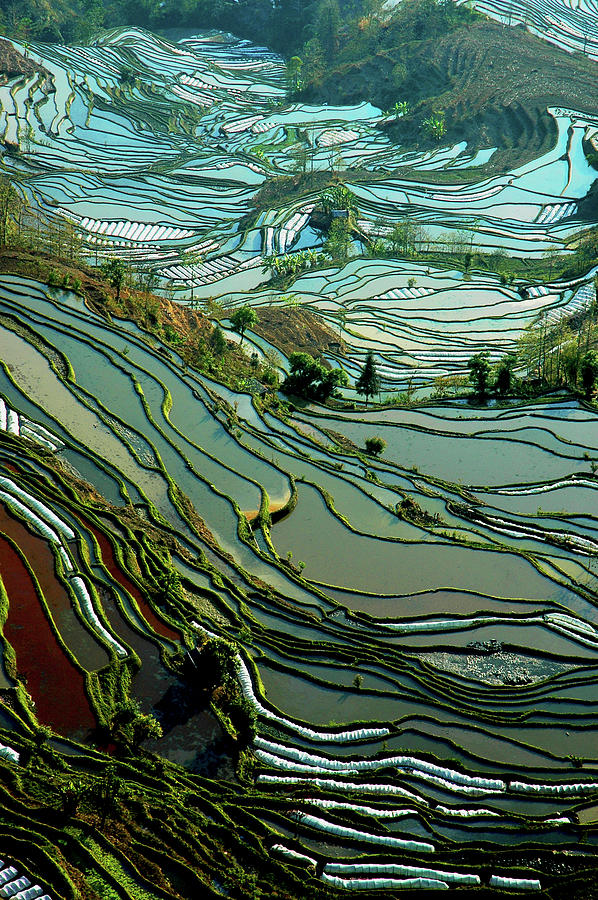 Rice Terrace Photograph by Ichauvel