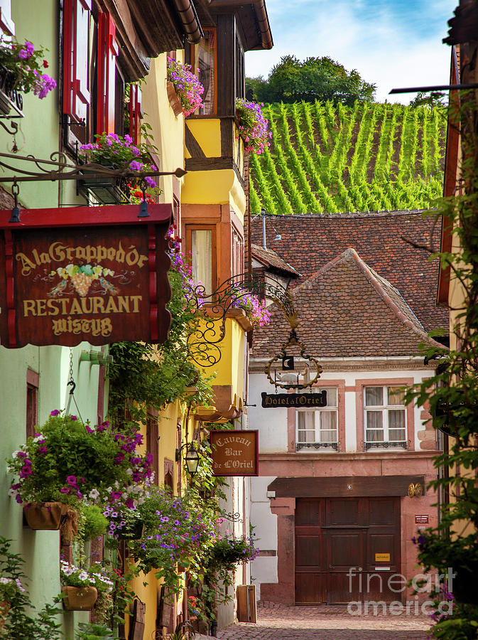 Riquewihr Morning Photograph
