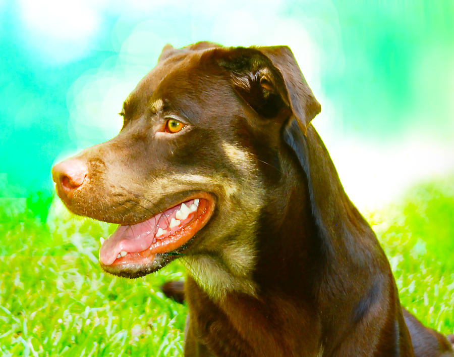 Rottweiler by Dave Byrne
