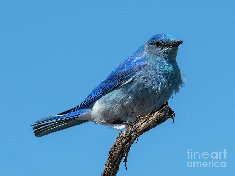 Ruffled Blue by Mike Dawson