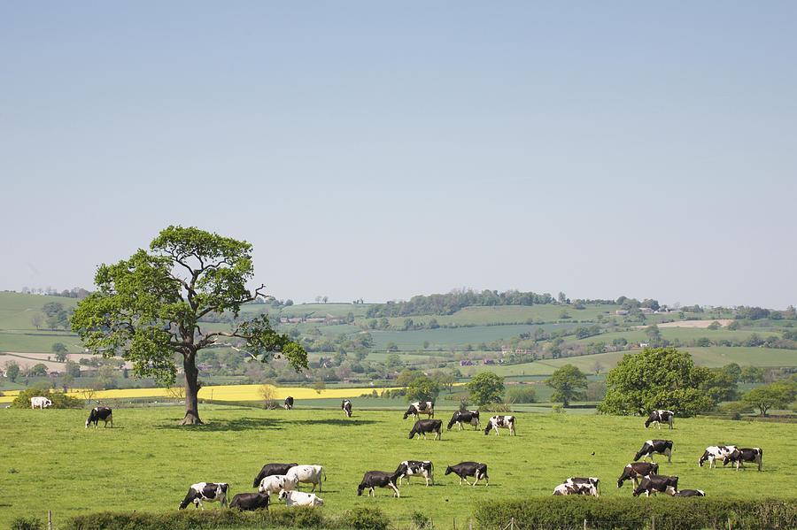 Rural England Photograph by Dageldog