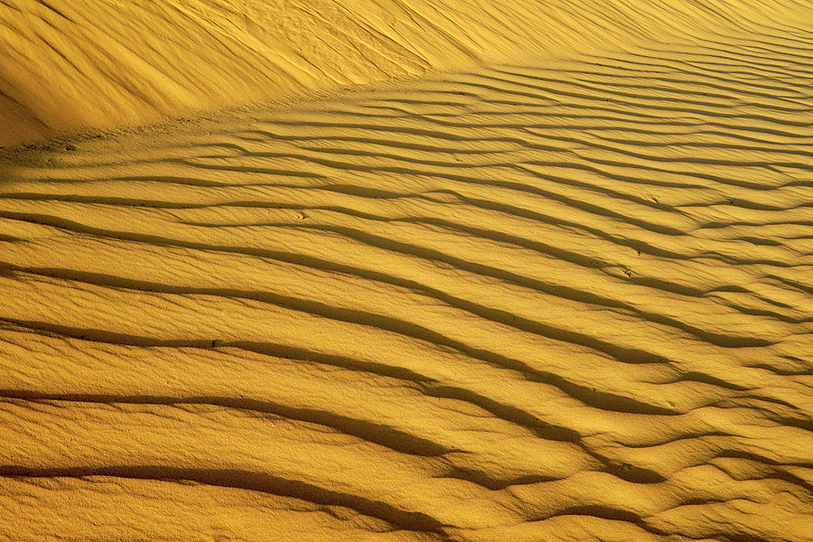 Sand Dune, Negev Desert, Israel Photograph by Photostock-israel