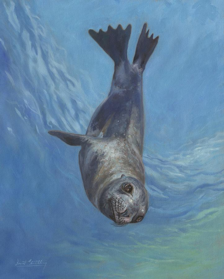 Sea Lion by David Stribbling