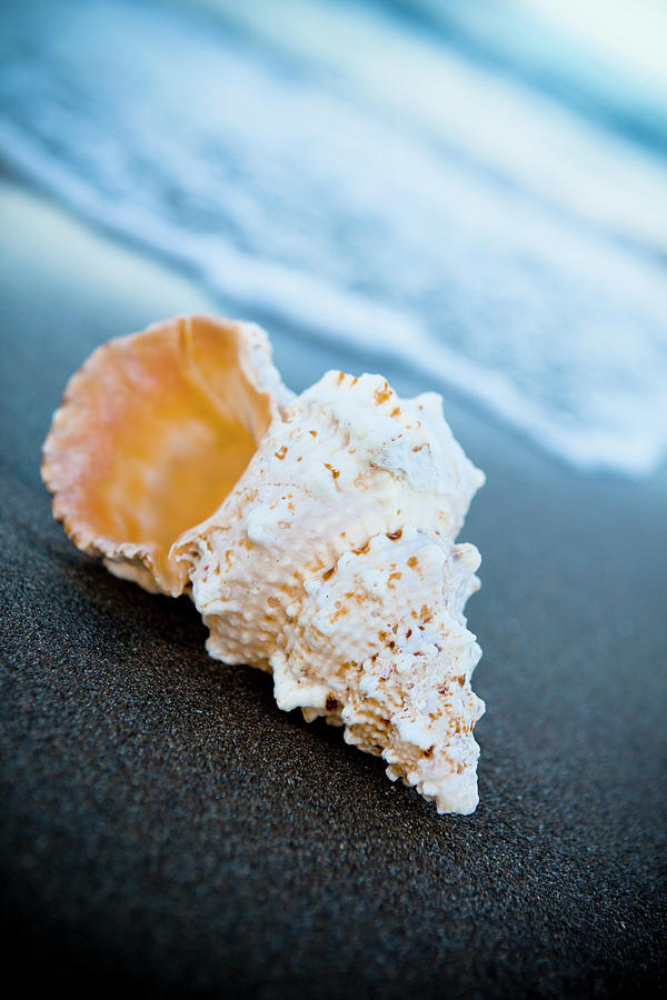 Sea Shell On The Sand Photograph by Caracterdesign