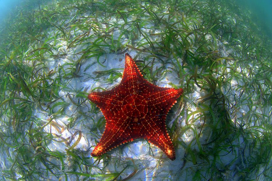 Starfish Photograph - Sea Star by Todd Hummel