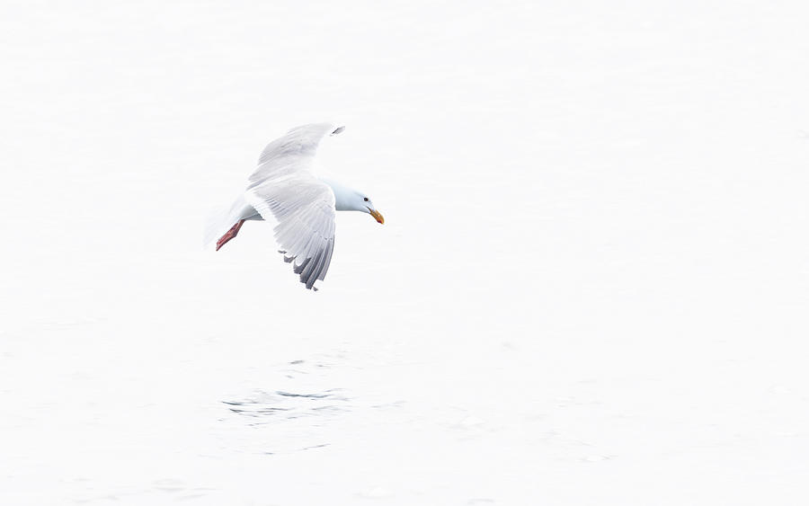 Seagull by Johanna Froese
