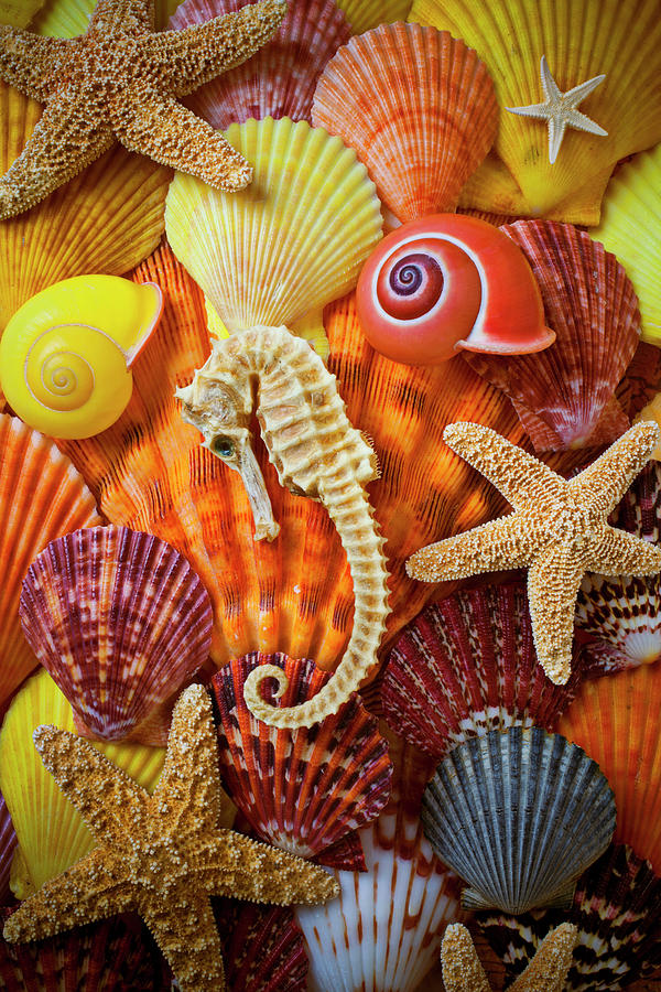 Seahorse And Assorted Sea Shells Photograph by Garry Gay