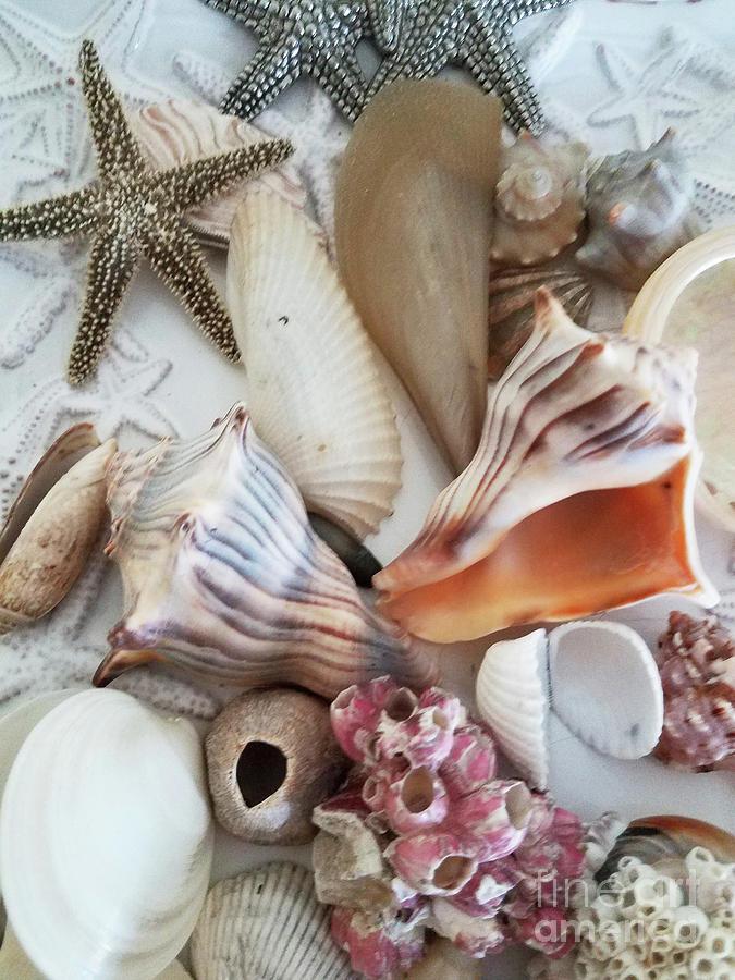 Seashell Assortment Iv Photograph