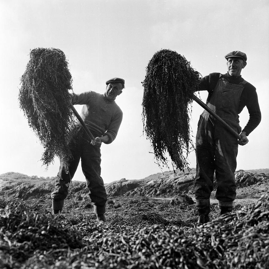 Seaweed Harvest Photograph by Thurston Hopkins