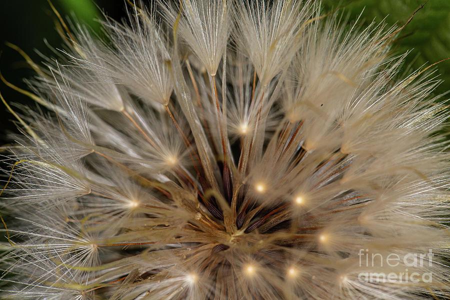 Seedheads by Brian Roscorla