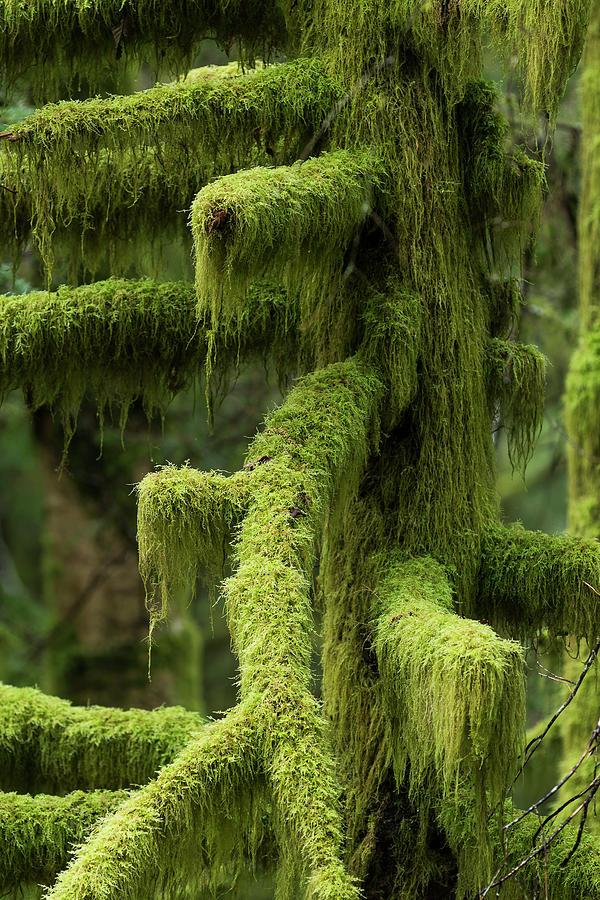 Shaggy Moss by Robert Potts