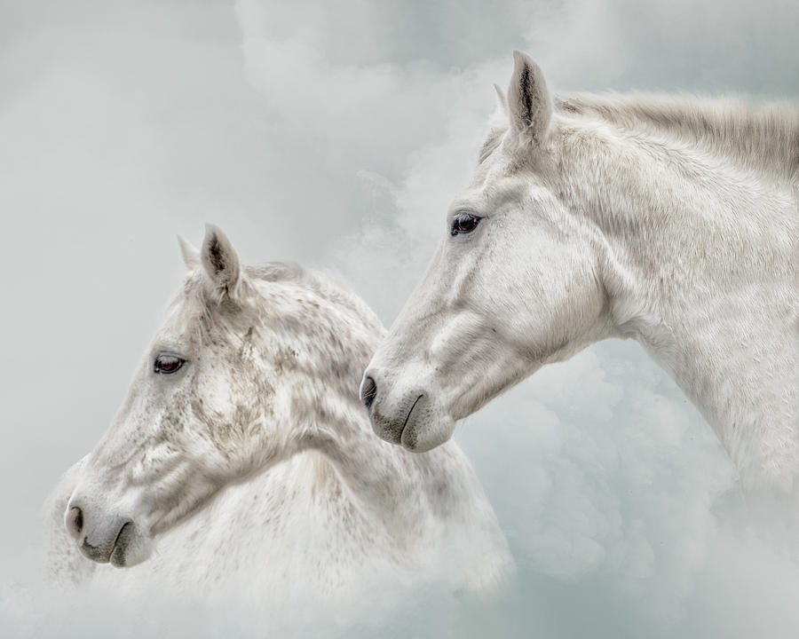 She Dreamed of White Horses by Ron McGinnis