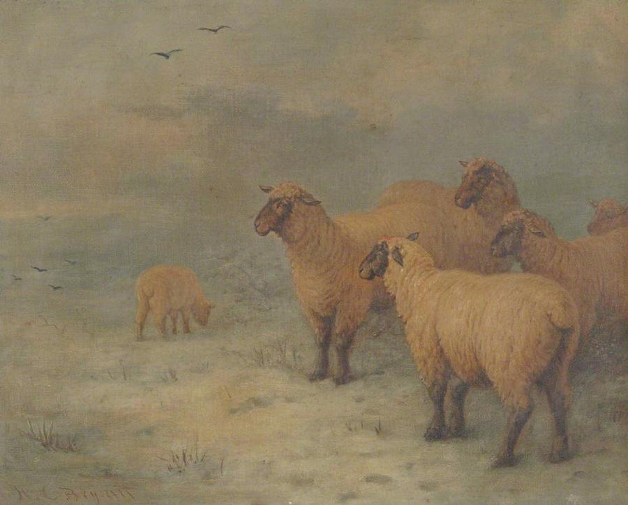 Sheep On Moorland Painting by MotionAge Designs