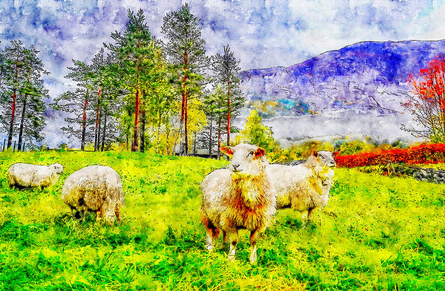 America Drawing - Sheep Pasture Watercolor Drawing by Hasan Ahmed
