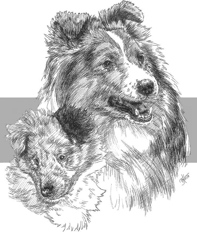 Herding Group Drawing - Shetland Sheepdog and Pup by Barbara Keith
