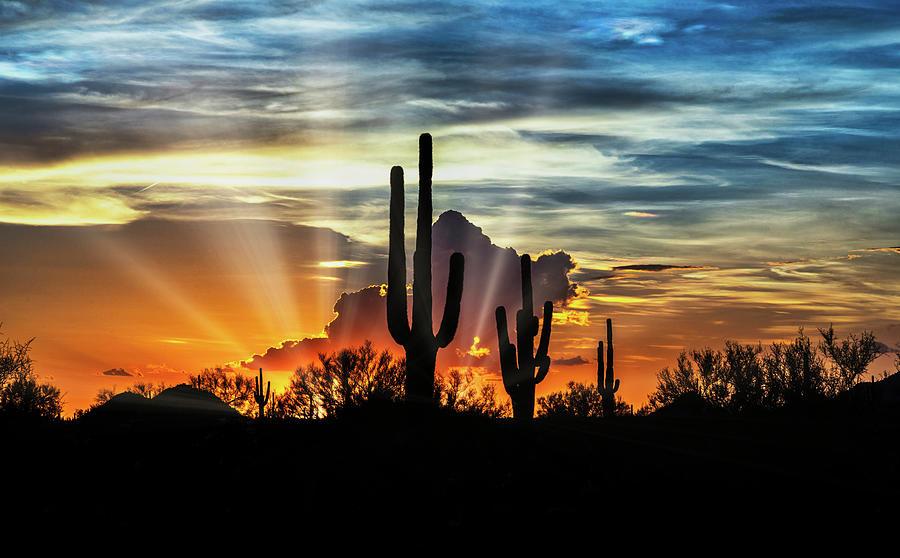 Silhouetted Saguaro Sunset  by Saija Lehtonen