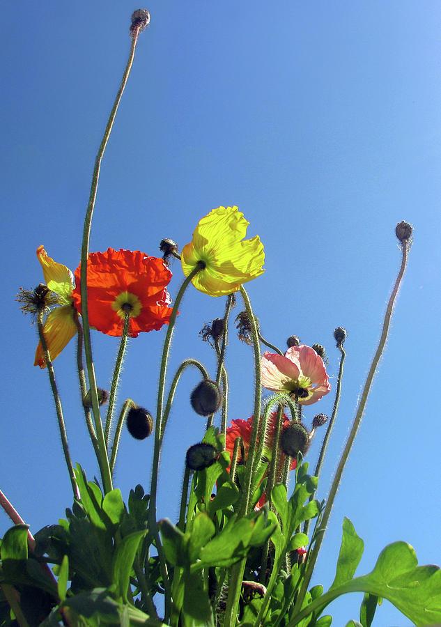 Sky Garden by Jaeda DeWalt