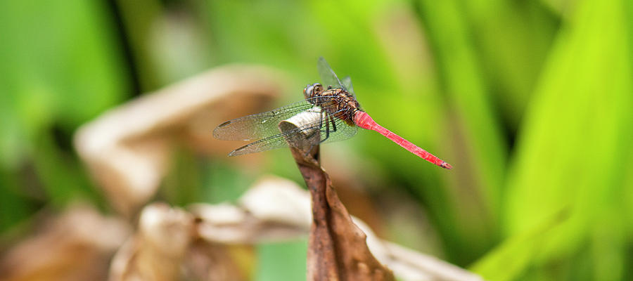 Dragonfly Photograph - Small Beautiful Dragonfly by Rob D Imagery