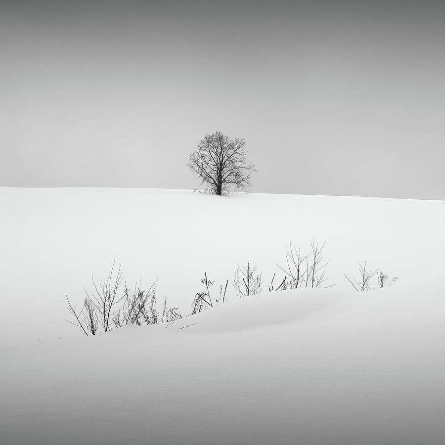 Snow and Trees VI by Francis Ansing