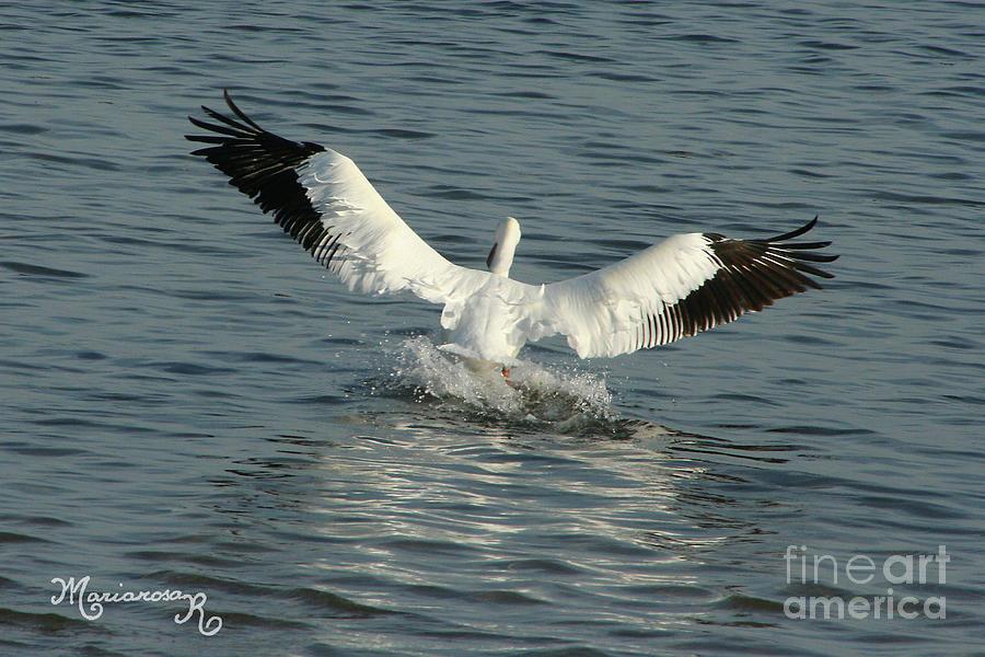 Soft Landing by Mariarosa Rockefeller