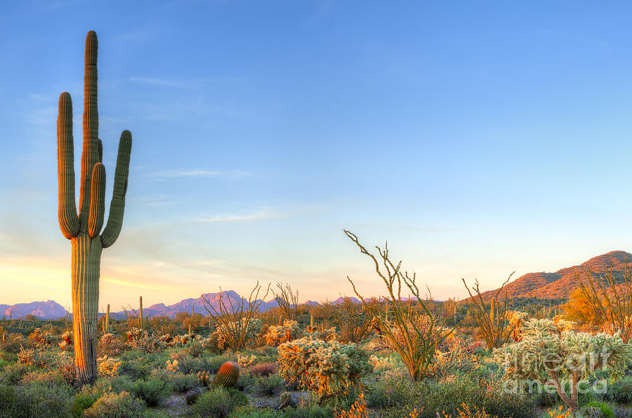 Southwest Photograph - Sonoran Desert Catching Days Last Rays 1 by Anton Foltin
