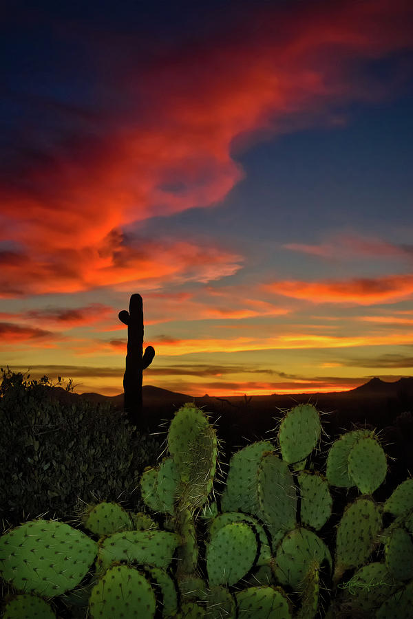Sonoran Sunset by Renee Sullivan
