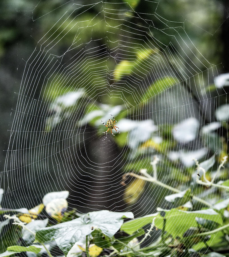 Spider at work by Paul Ross