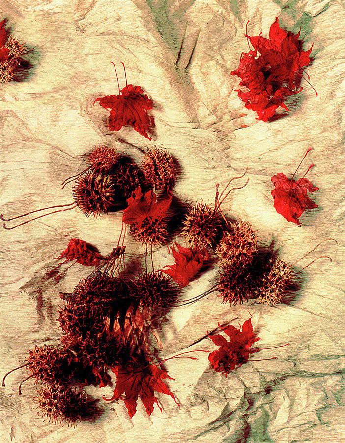 Spiked Nuts Red by Roger Bester