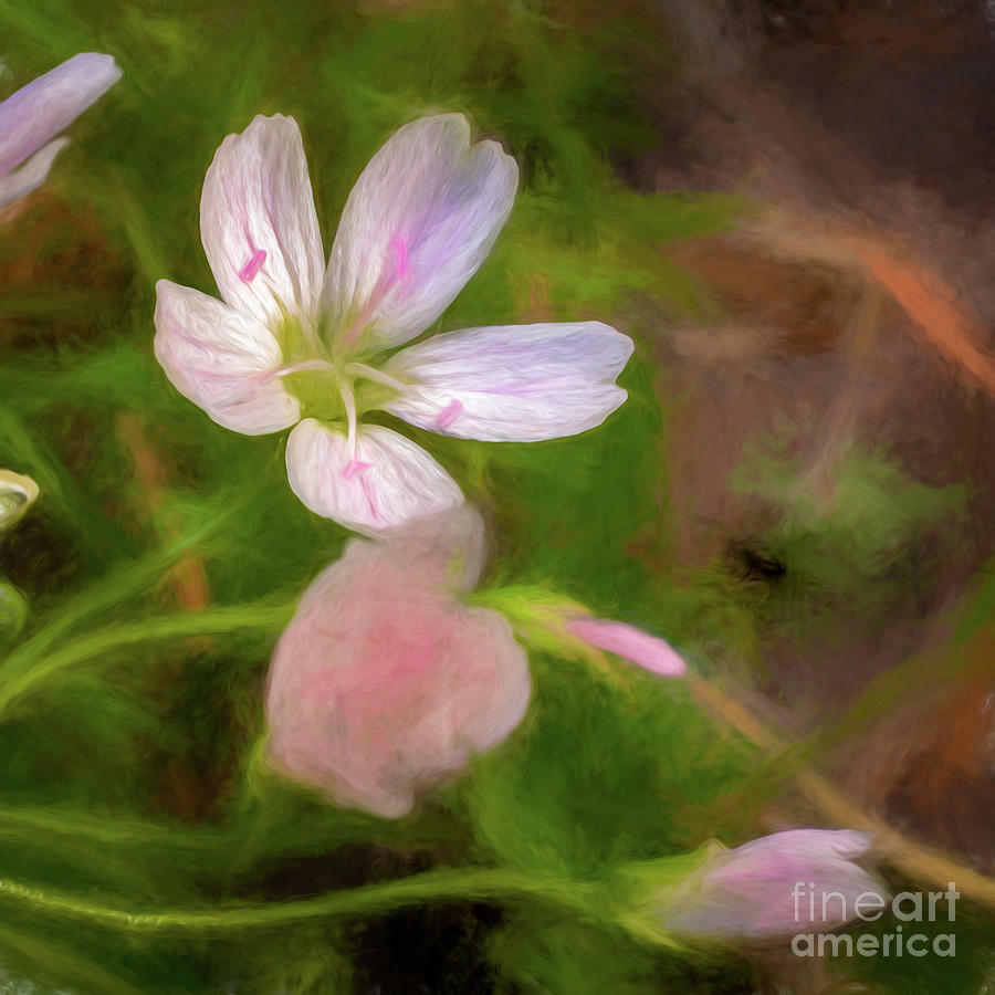 Spring Beauty by Roxie Crouch