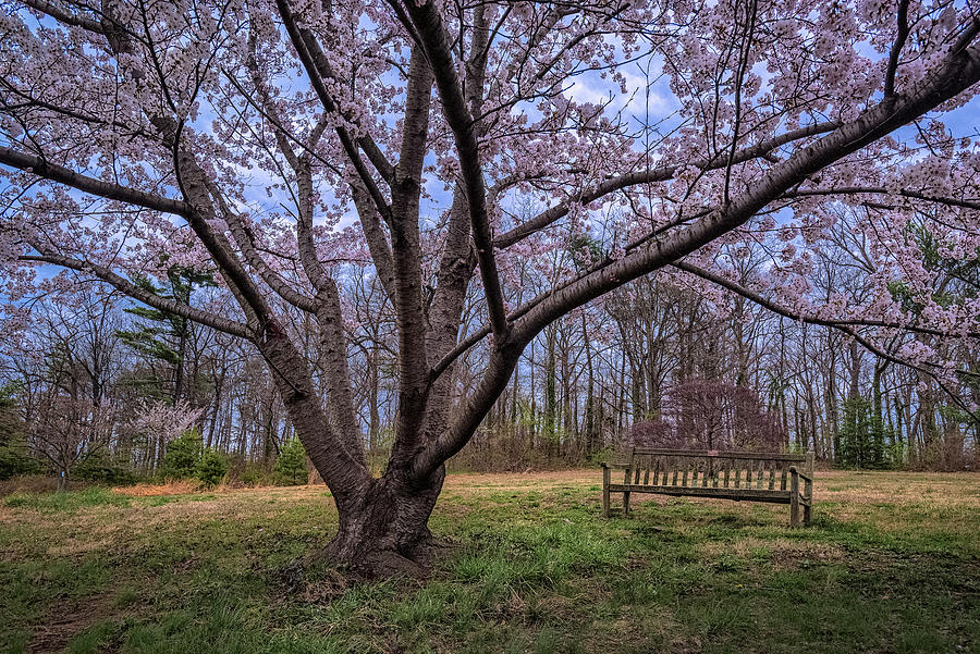 Spring Color by Robert Fawcett