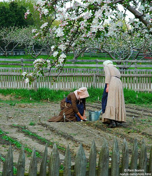 Spring Planting by Rein Nomm
