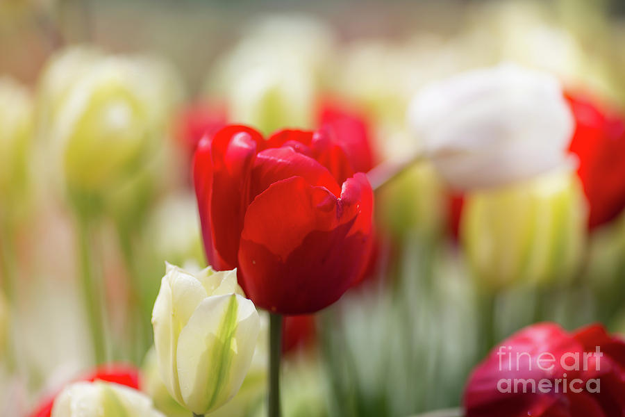 Springtime by Eva Lechner