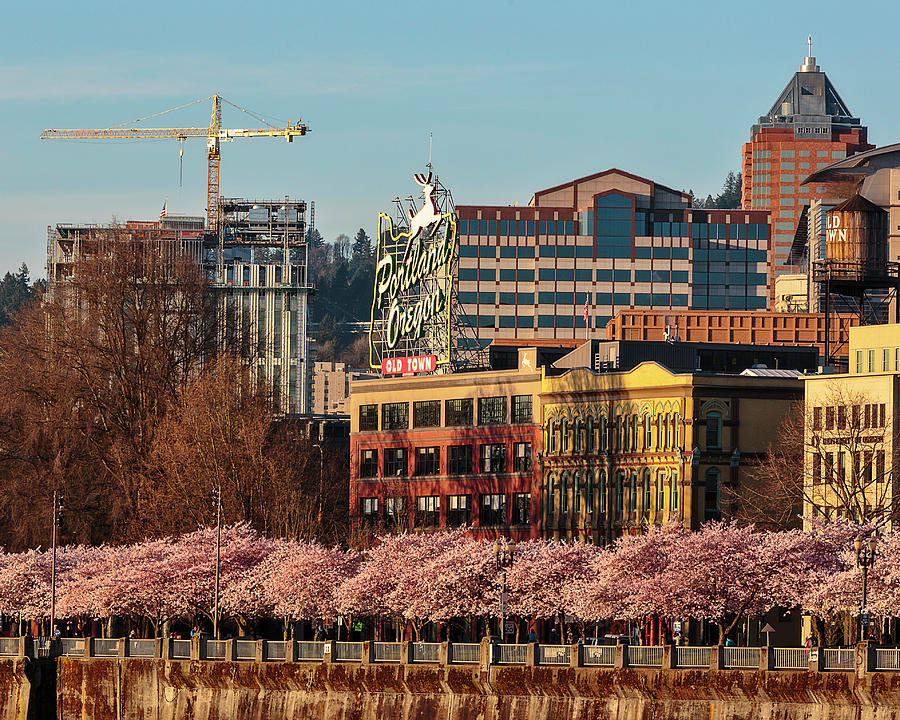 Springtime In Portland Oregon by Wes and Dotty Weber
