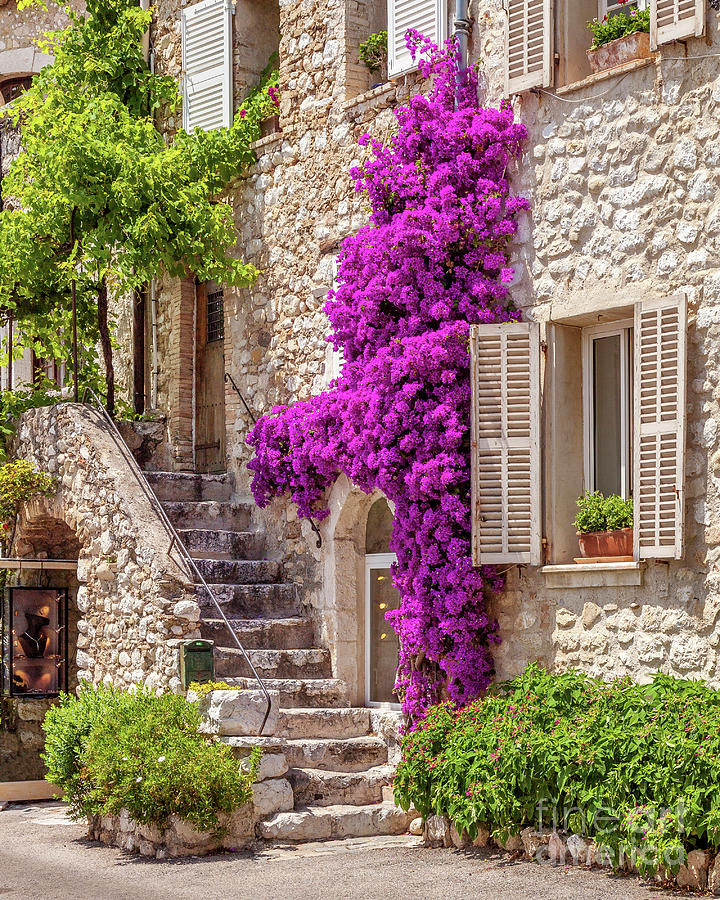 St Paul de Vence Flowers by Brian Jannsen