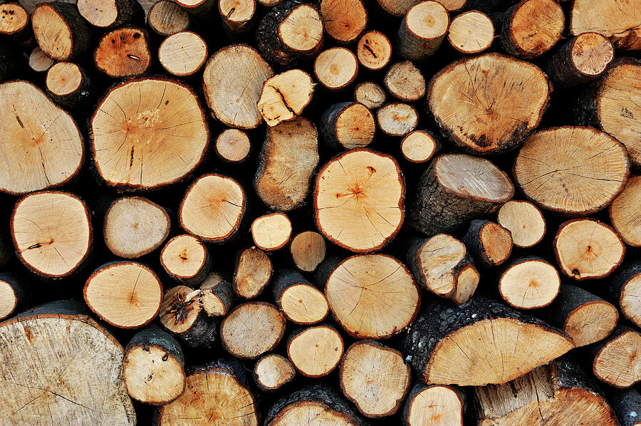 Stack Of Tree Logs Photograph by Sami Sarkis