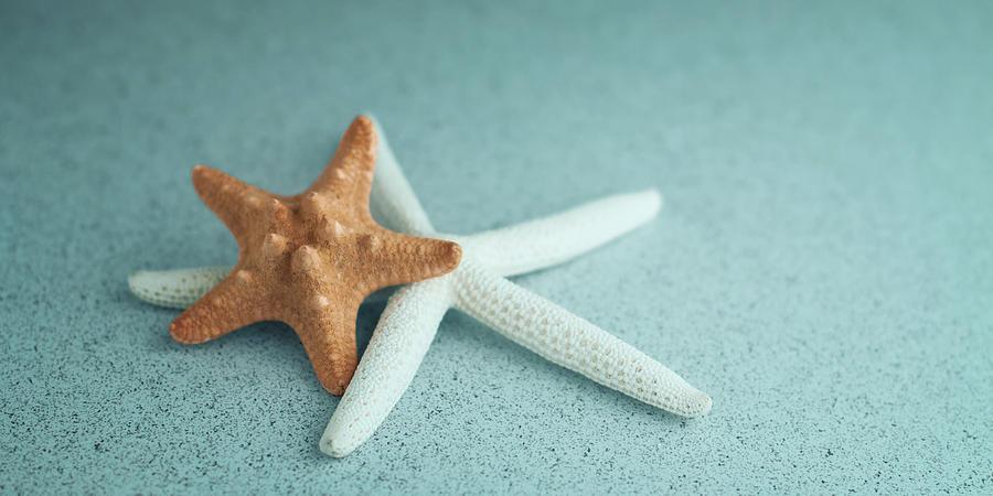 Starfish on Aqua by Tom Mc Nemar