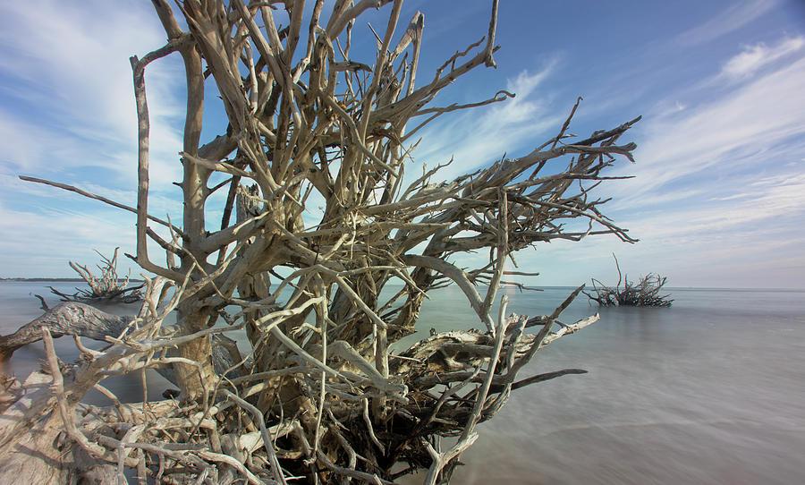 Sticks by Robert Och