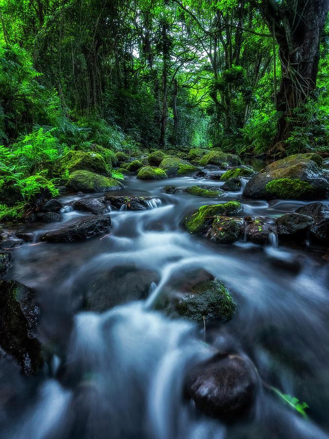 Stream Running Through The Lush by Robert Postma