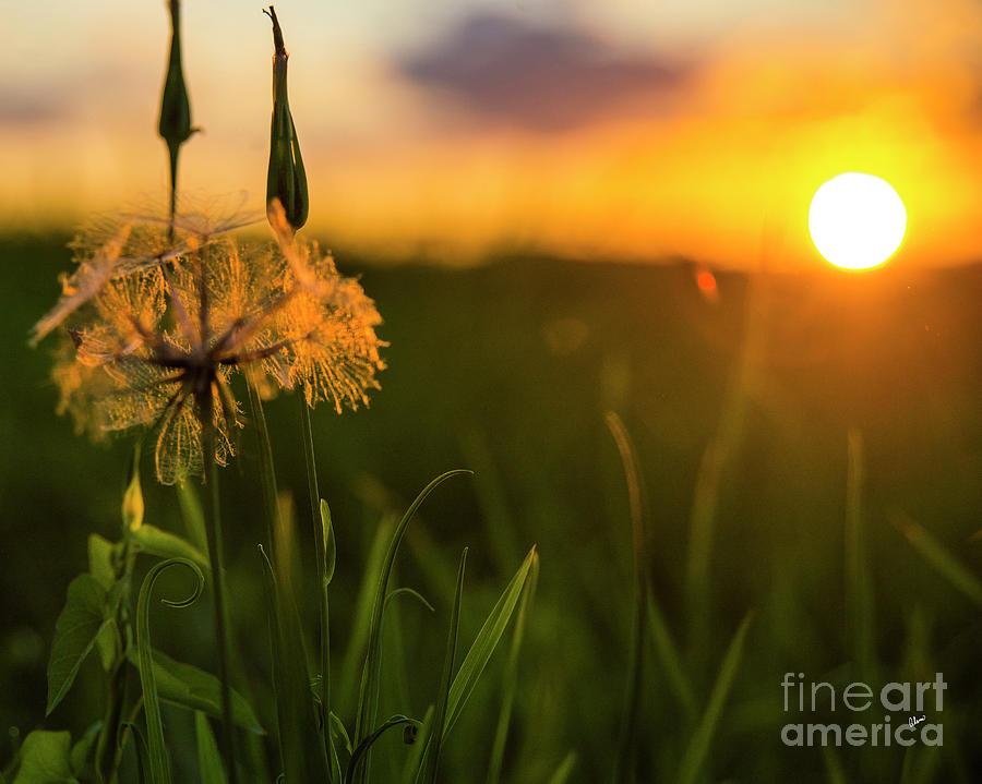 Summer Photograph