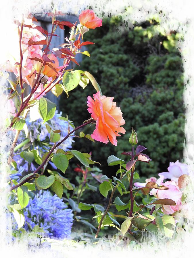 Summer Garden by Leslie Hunziker