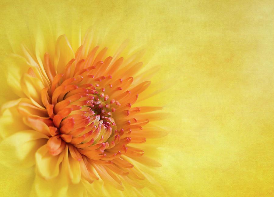 Summertime by Cyndy Doty