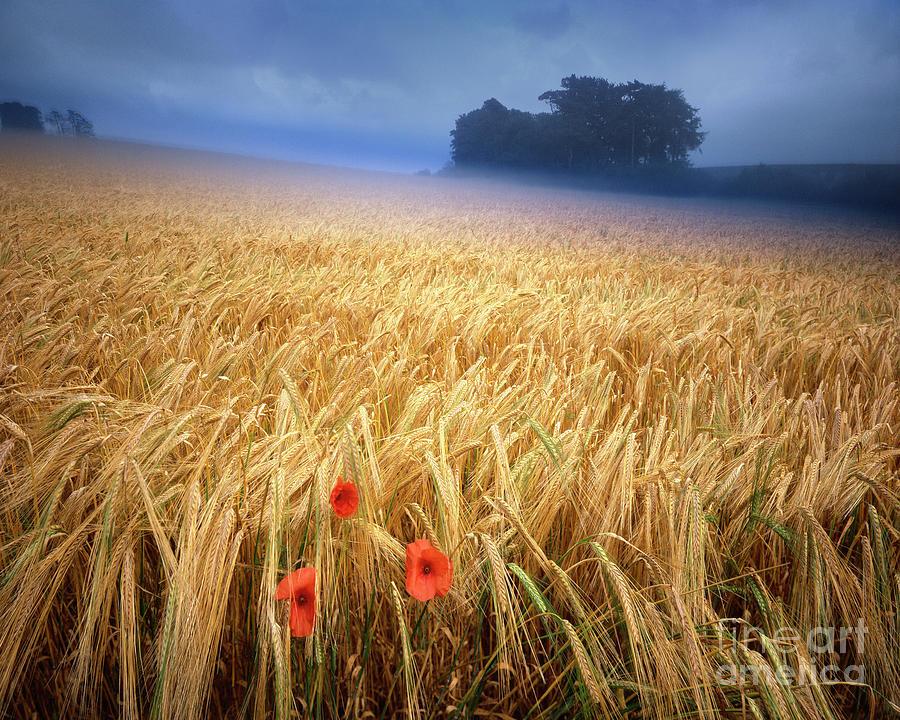 Summertime by Edmund Nagele