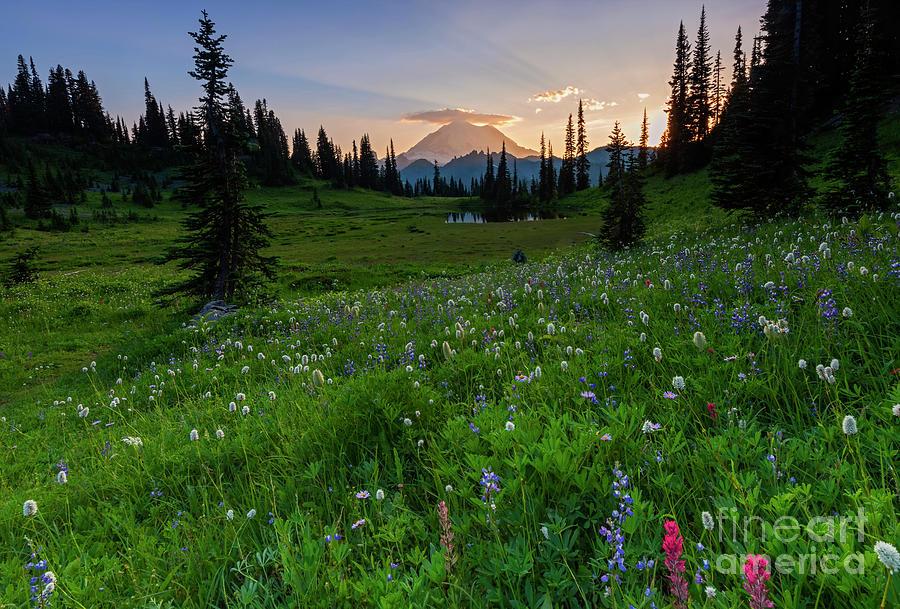 Sunbeams over Rainier by Mike Dawson