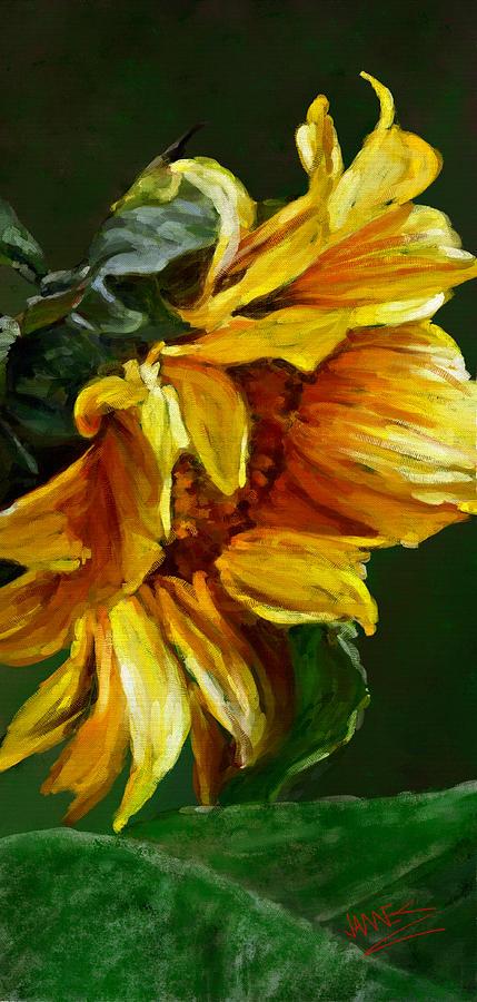 Sunflower by James Shepherd