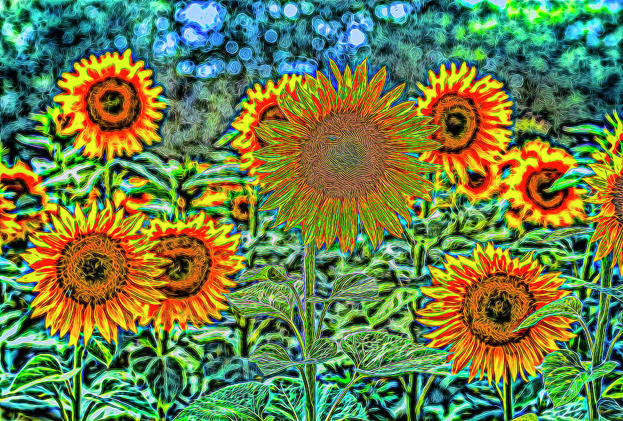 Sunflowers Of Dreams Photograph